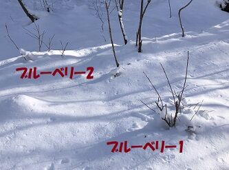雪だもので5
