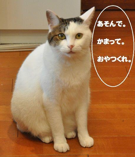 かわいそうなネコ