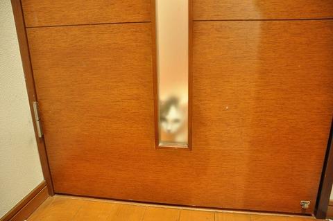 廊下のネコ