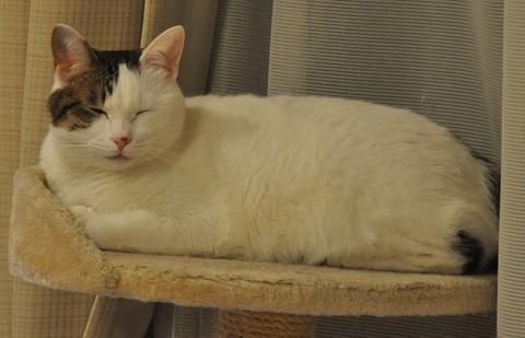 香箱と眠り猫の中間
