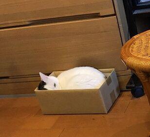 ネコじゃないもの1