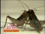 http://livedoor.blogimg.jp/mediatwo/imgs/7/9/79bf1336-s.jpg