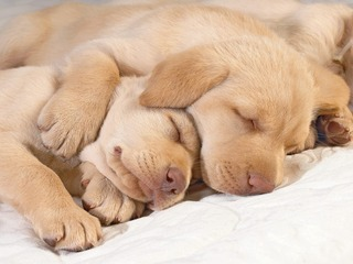 puppies-sleeping