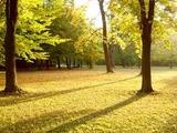 autumnmo