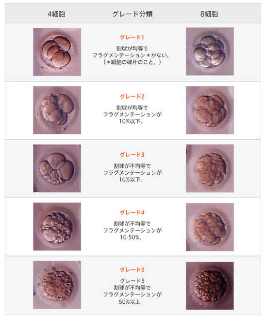 受精卵のグレード