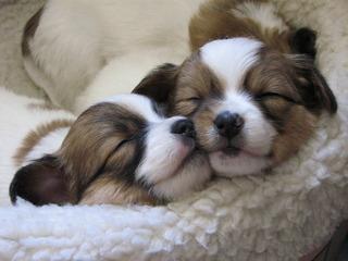 sleepy_dogs