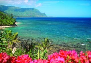 卵子提供_hawaii