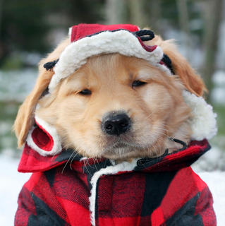 Winter-Dog