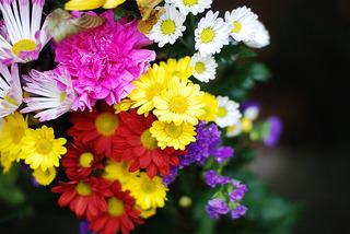 20070325_flower