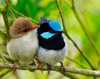 bird_pair