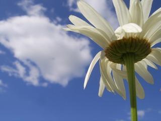 FlowerAndSky_