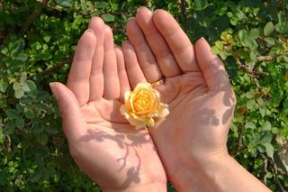 flower_in_hands