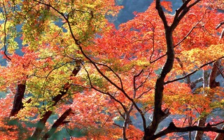 Autum-tree