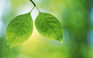 Green-Leave