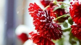 flower_卵子提供_代理出産