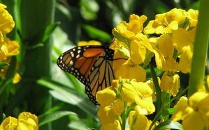 2342_free_spring_flowers_medibridges