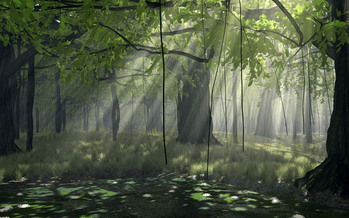 Nature_Forest_Forest_010852_