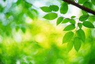 stock-photo-3029533-fresh-leaves[1]