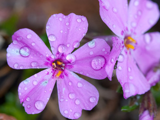 day-80-wet-flowers
