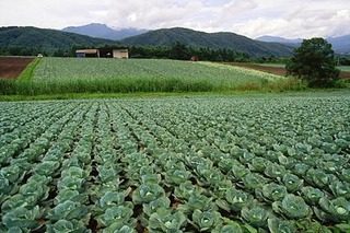 japanese_agriculture