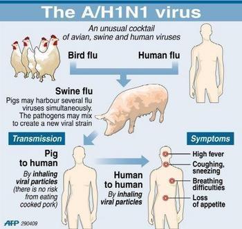 mesbah_aajadblog_1250330563_9-swain-flu