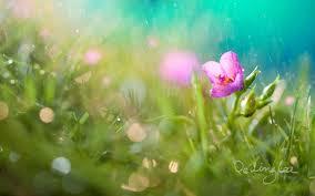 rain_flower_2