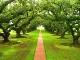 oak_tree_plantation_by_thislilpiggyflew