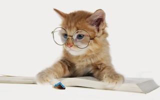 猫ちゃん勉強中