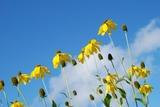 nature_flower_sky_218344[1]
