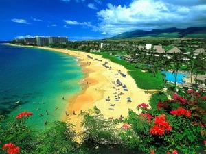 hawaii 卵子 メディブリッジ