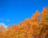 autumnsky1