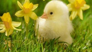 springbaby-medibridge