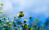 flowers-field-nature[1]