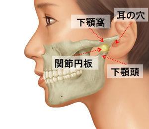 「顎の付け根 画像」の画像検索結果