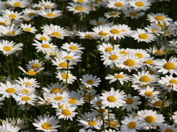 いっぱいの花3