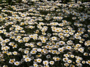 いっぱいの花2