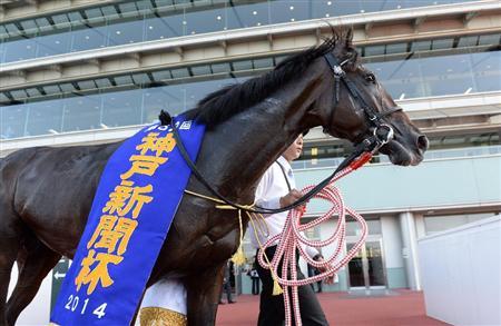 神戸新聞杯予想2015