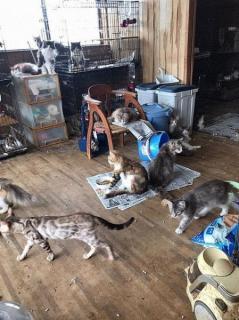 愛知・岡崎の住宅にネコ250匹 国内最大規模の多頭飼育崩壊