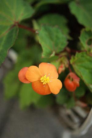 flower3 jun0616