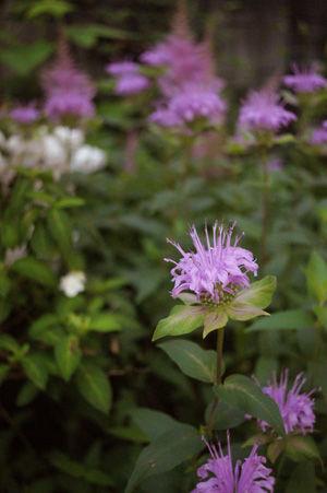 flower2 jun0616