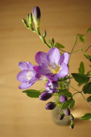 flower apr1116