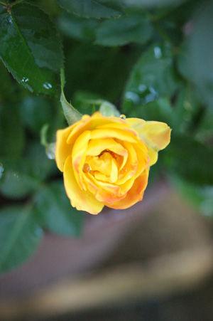 flower nov0515