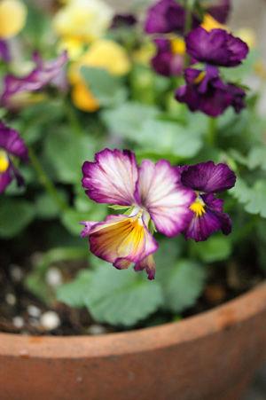 flower nov0816