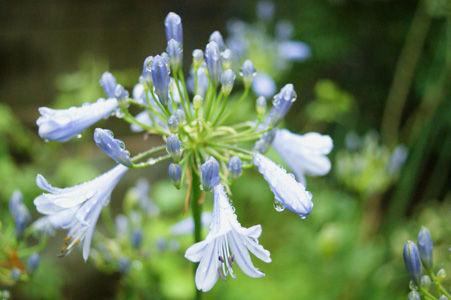 flower2 jun1316