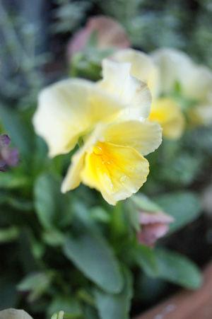 flower3 nov0515