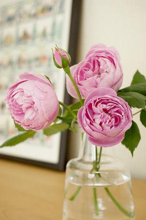 rose may0817