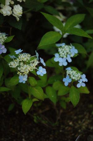 flower1 jun0616