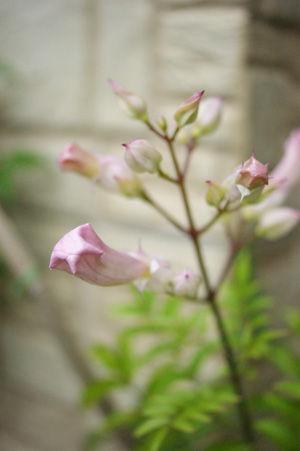 flower jun1316