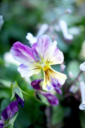 flower2 nov0515