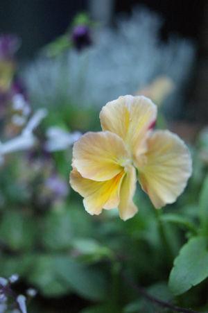 flower nov1015
